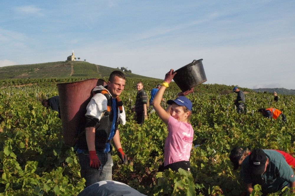 Authentic French Wine: Montangeron Family of Winemakers