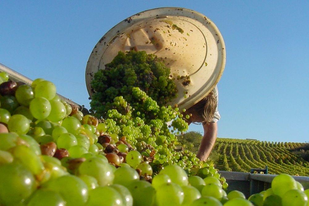 La Vendange 2021: France's Grape Harvest