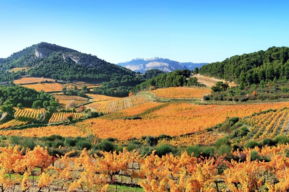 Fall In Love With France: Provence